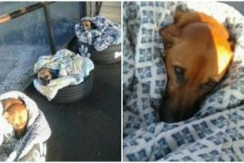 Бразилия: зачем бездомным собакам открыли двери автовокзала