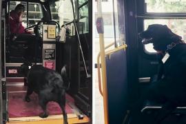 Пёс самостоятельно ездит на прогулку на автобусе