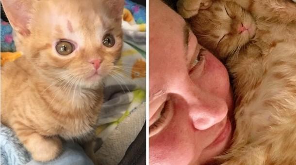 Что помогло котёнку выздороветь после операции на мозге
