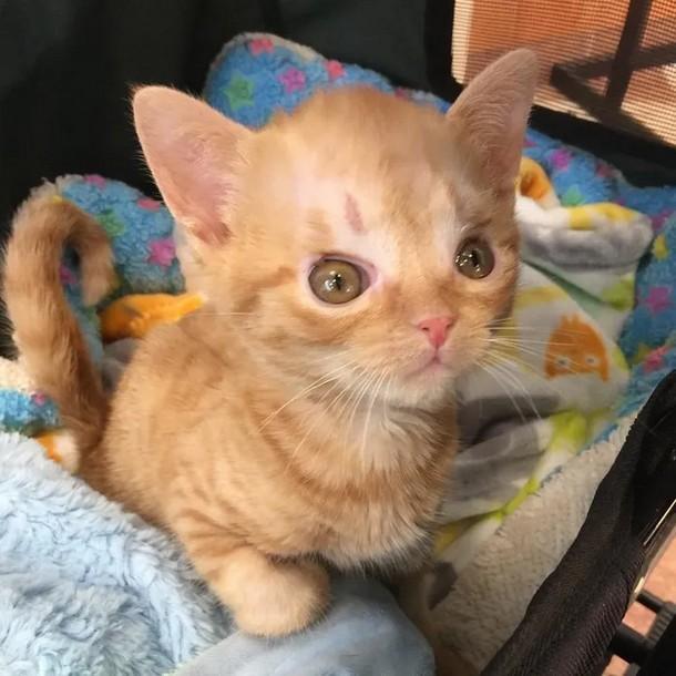 2 - Что помогло котёнку выздороветь после операции на мозге