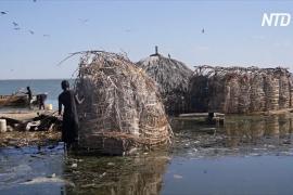 Озёра Рифтовой долины в Кении продолжают разливаться, угрожая жизни людей