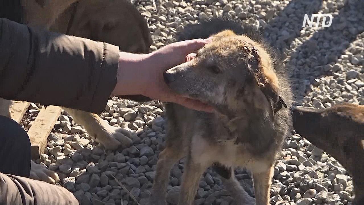 Собачий приют в Косове выхаживает животных и отправляет в новые дома в Европе и США