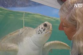 Почему в районе Большого барьерного рифа появляется много черепах с патологиями
