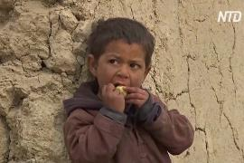 ЕС: половина афганцев нуждается в гуманитарной помощи