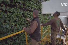 В Испании разбили самый большой в Европе крытый вертикальный сад
