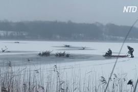 Польские пожарные спасли 15 оленей, провалившихся под лёд