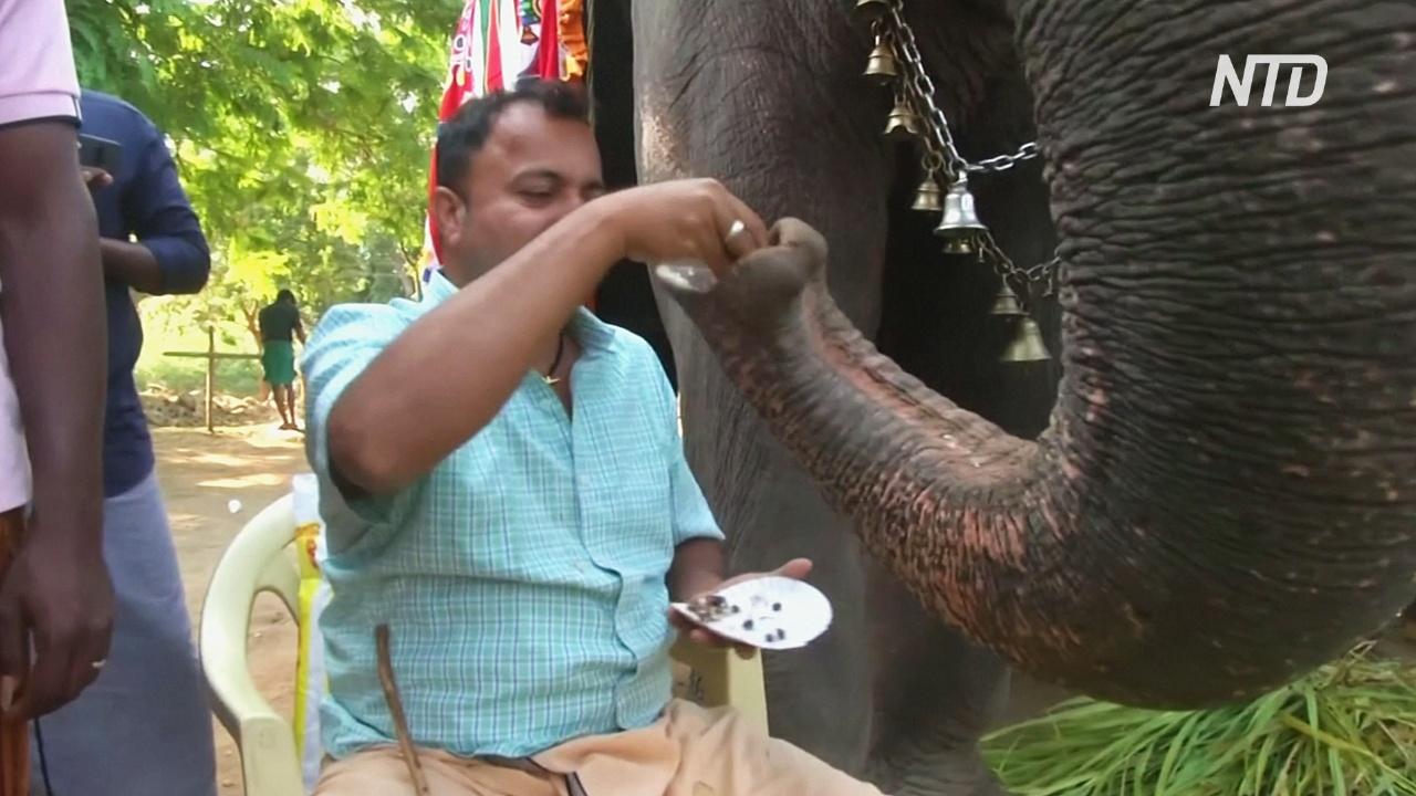 Курорт для слонов: как в Индии отдыхают толстопятые