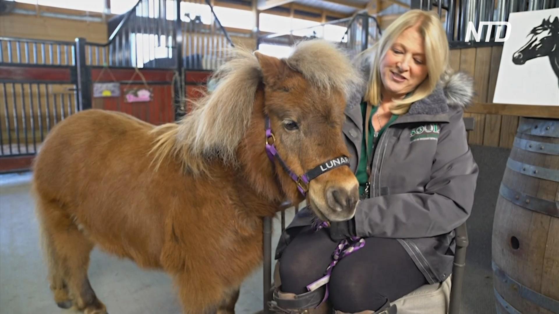 В США миниатюрные лошади-терапевты во время пандемии перешли на «удалёнку»