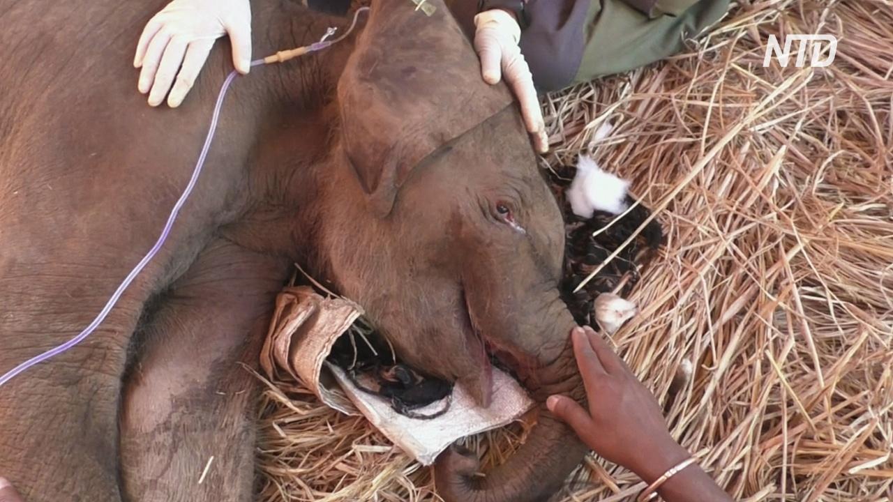 В Индии спасли брошенного больного слонёнка