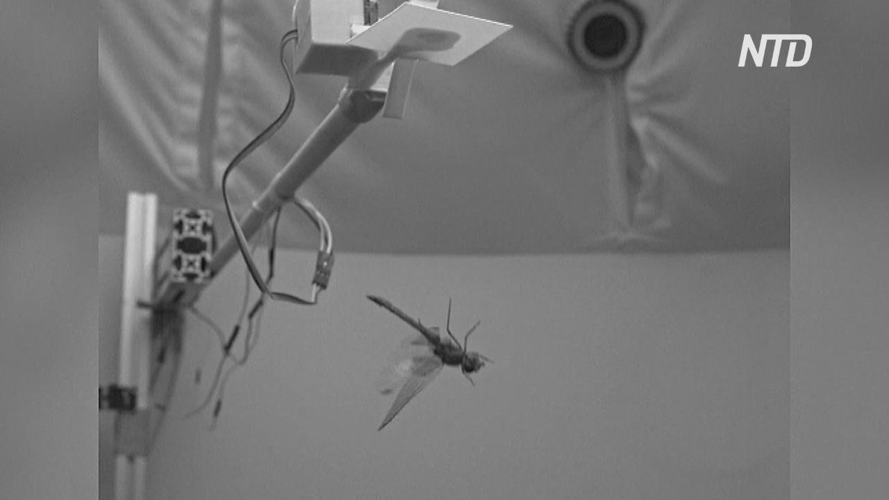 Новое исследование: стрекозы возвращают баланс, делая сальто назад