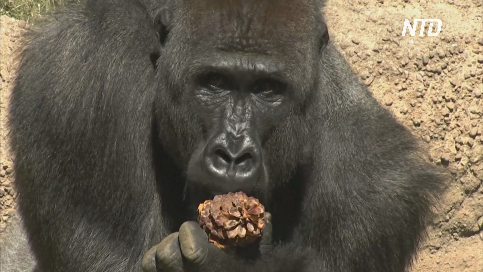 Лос-Анджелесский зоопарк вновь открывается после карантина