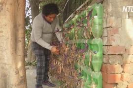 Индиец основал первую в мире бесплатную больницу для деревьев