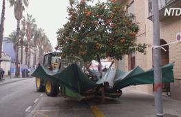 Видео с трактором, трясущим апельсиновые деревья, стало популярным в Интернете