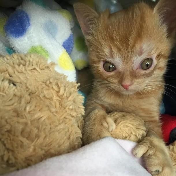 4 - Что помогло котёнку выздороветь после операции на мозге