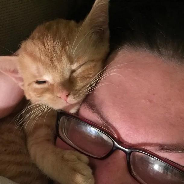 8 - Что помогло котёнку выздороветь после операции на мозге