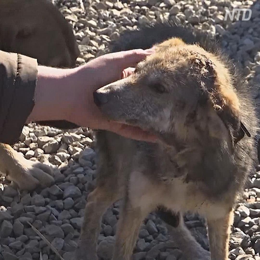Приют в Косове ищет собакам хозяев в Европе и США