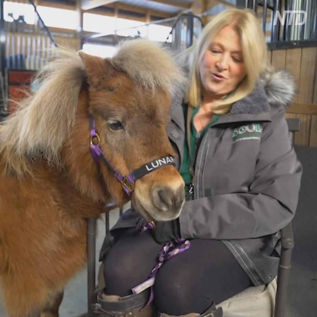 Животные-терапевты помогают людям во время онлайн-встреч
