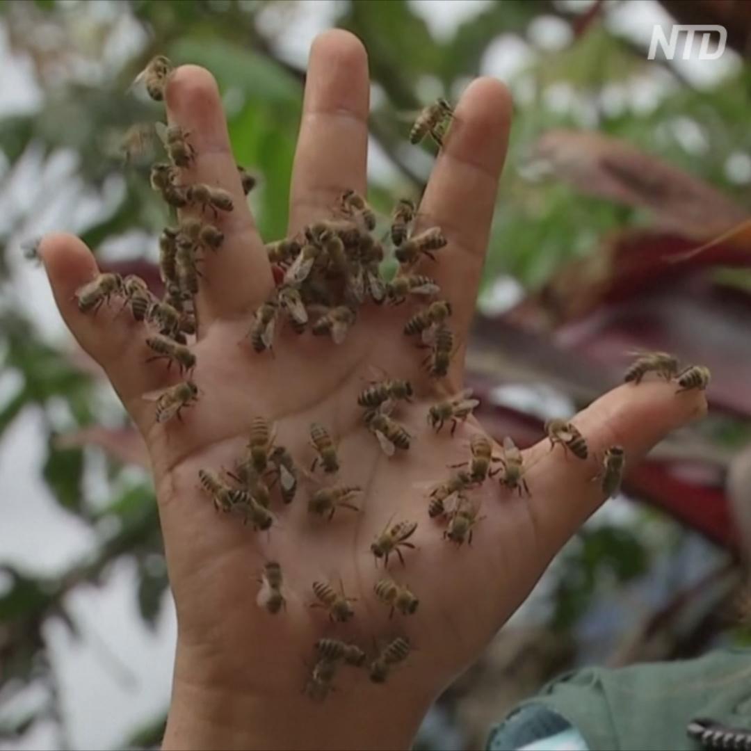 Пара из Боливии создала пчелиный заповедник