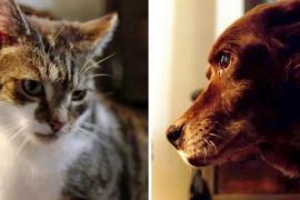 Как изменилась жизнь слепой собаки после появления кошки