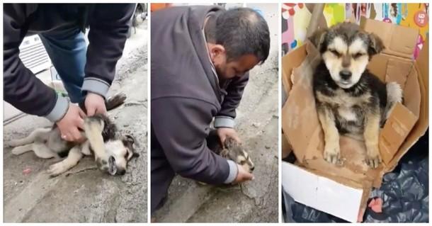 Как мужчине удалось спасти от смерти бездомного щенка