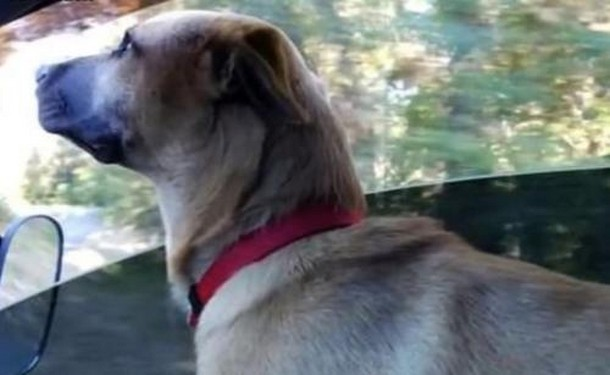 Novyj risunok 10 1 - Мужчина не дал собаке умереть под колёсами поезда