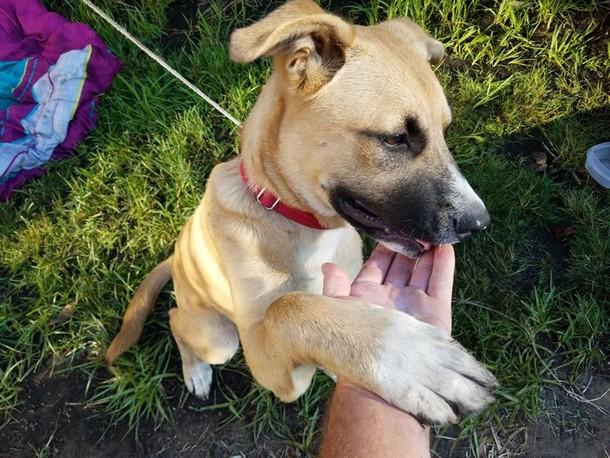 Novyj risunok 11 2 - Мужчина не дал собаке умереть под колёсами поезда