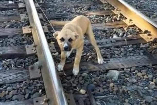 Novyj risunok 13 - Мужчина не дал собаке умереть под колёсами поезда