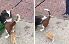 Как бродячий котёнок выбрал себе хозяев