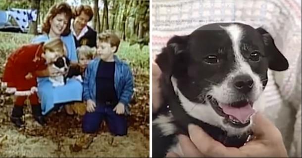 Пёс вернулся домой после того, как его похоронили