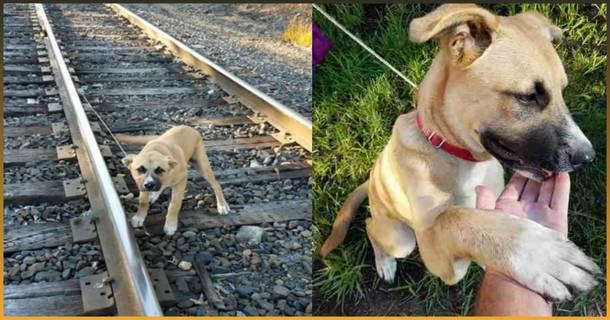 Мужчина не дал собаке умереть под колёсами поезда