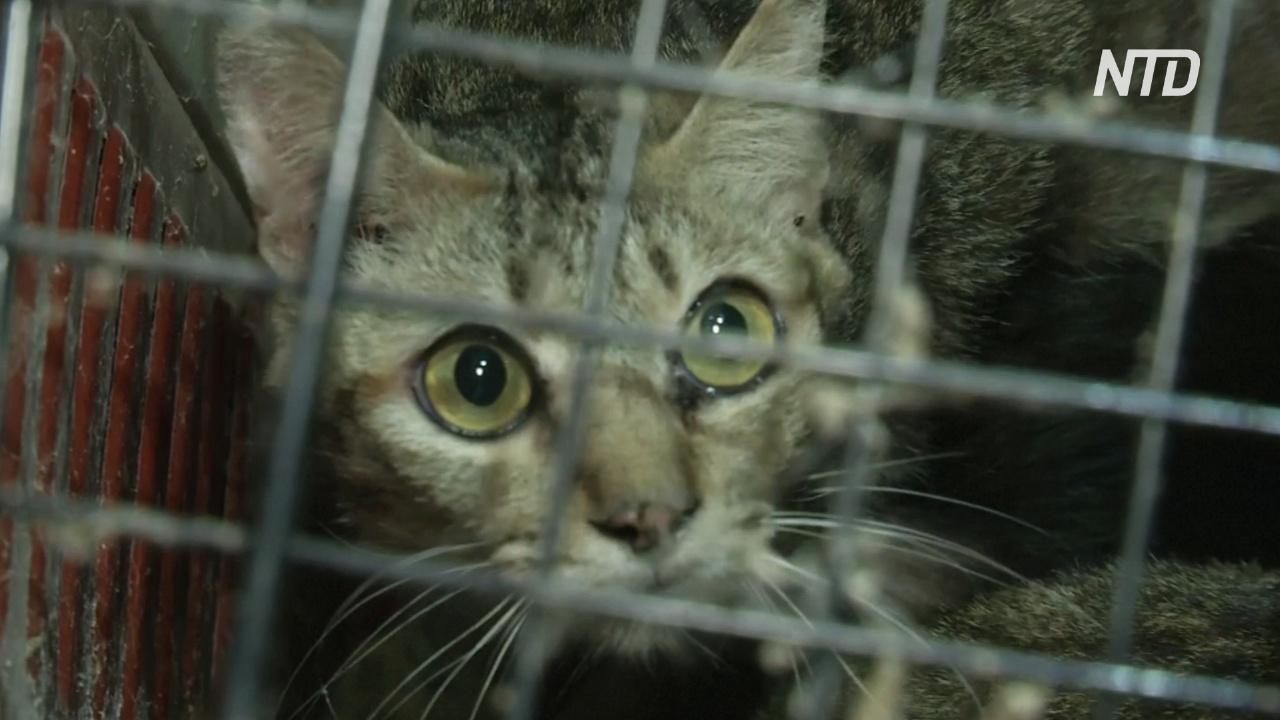 В Таиланде спасли 300 кошек, брошенных в двух квартирах