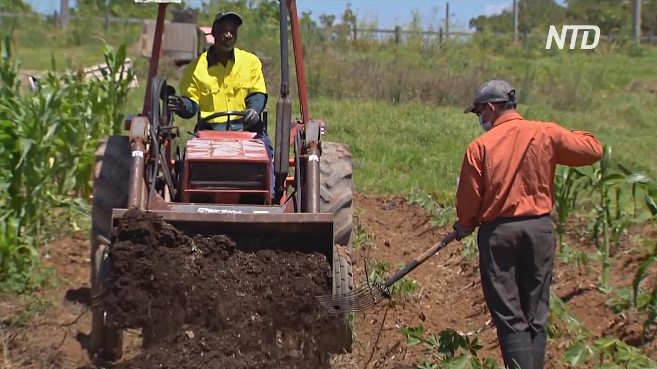 Конголезский беженец выращивает африканские овощи в Австралии