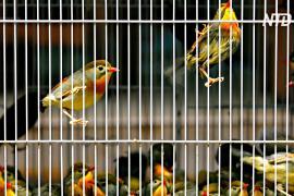 Париж закроет старинный птичий рынок XIX века