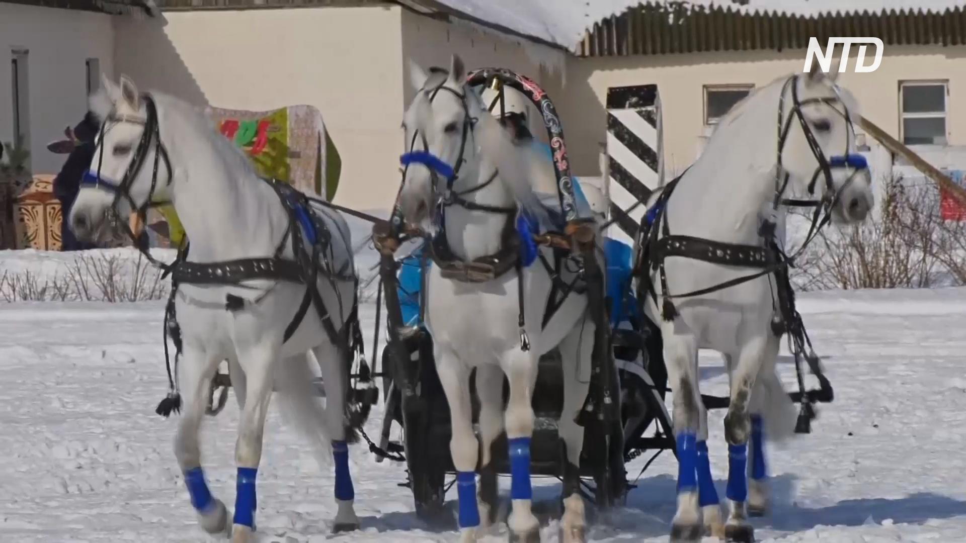 Состязания русских троек прошли во Владимирской области