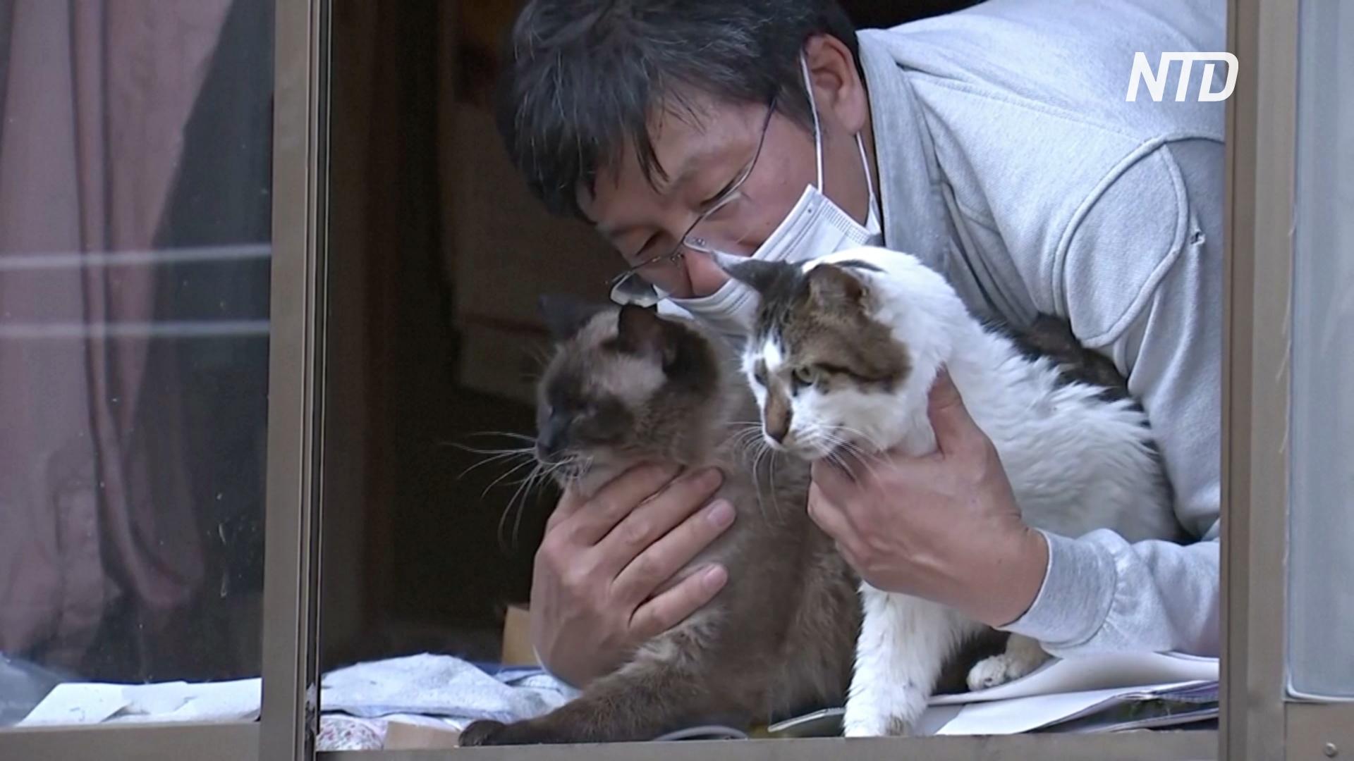 Японец не уехал после аварии на «Фукусиме», чтобы заботиться о брошенных кошках