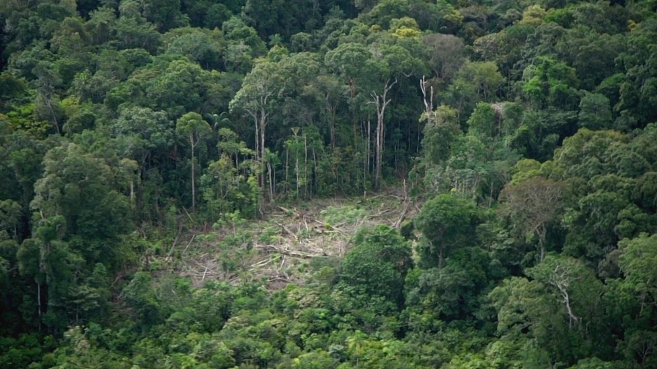 Колумбия спасает леса и планирует сократить вырубку на 30% к 2022 году