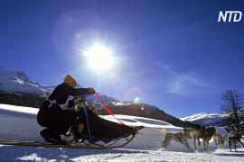 Скиджоринг и собачьи упряжки: на Байкале прошла 150-километровая гонка