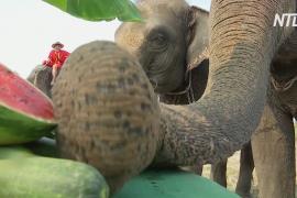 В Таиланде отмечают День слона с надеждой на скорое возвращение туристов