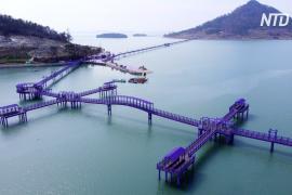 Два острова в Южной Корее стали фиолетовыми, чтобы привлечь туристов