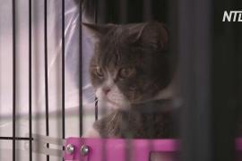 В Таиланде выставят на торги кошек, конфискованных у подозреваемой в наркоторговле