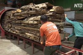 Гонконгские столяры дают вторую жизнь спиленным и упавшим деревьям