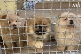 Почти как в кино: в Германии 101 щенка спасли от контрабандистов