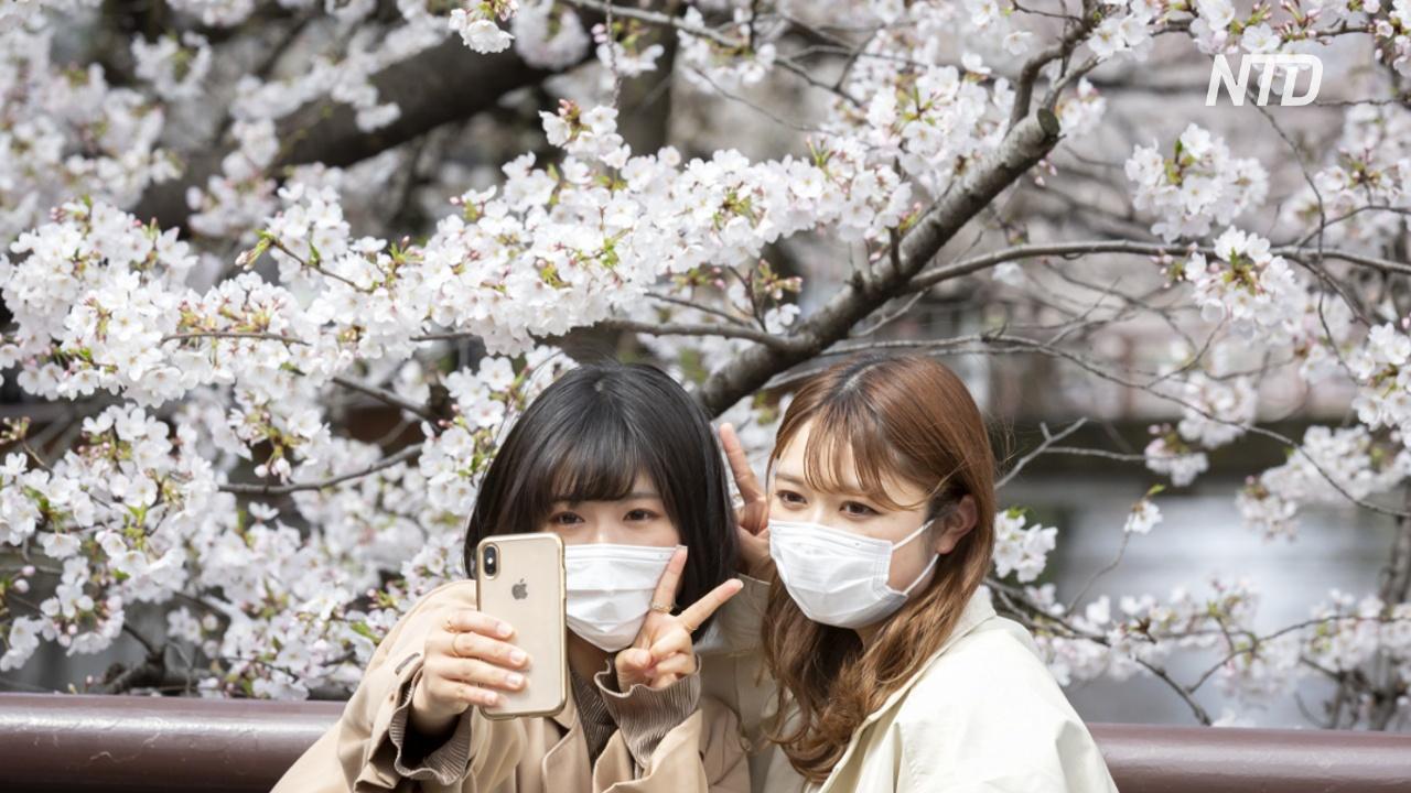 Не устоять: токийцев выманивает на улицы цветущая сакура