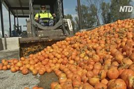 Электричество из апельсинов делают в Севилье