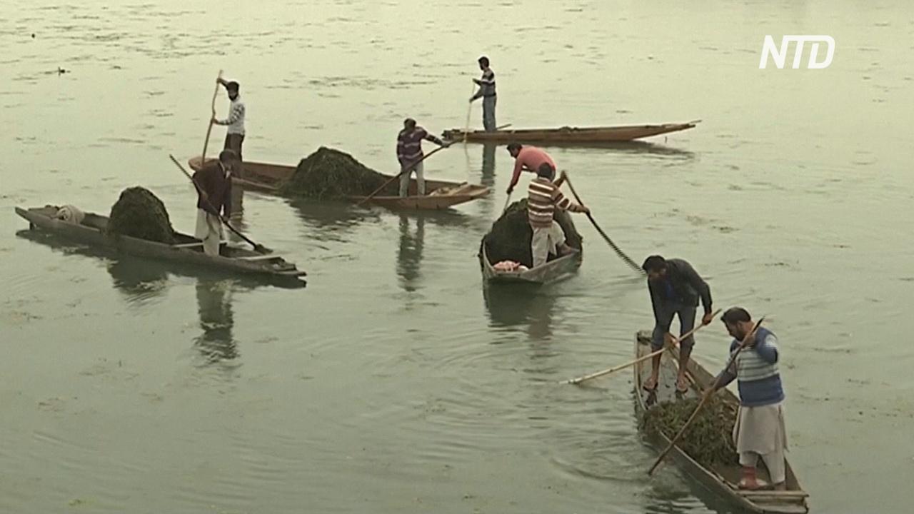 Знаменитое озеро Дал в Кашмире очищают от мусора и сорняков