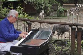 Для питомцев колумбийского зоопарка провели концерт классической музыки