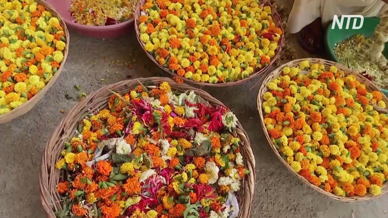 В Индии очищают Ганг от цветочных отходов и делают из них ароматические палочки