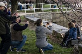 Цветущая сакура принесла весну в Вашингтон