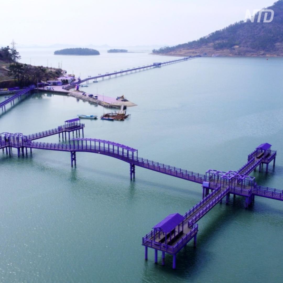 Два южнокорейских острова превратились в лавандовый рай