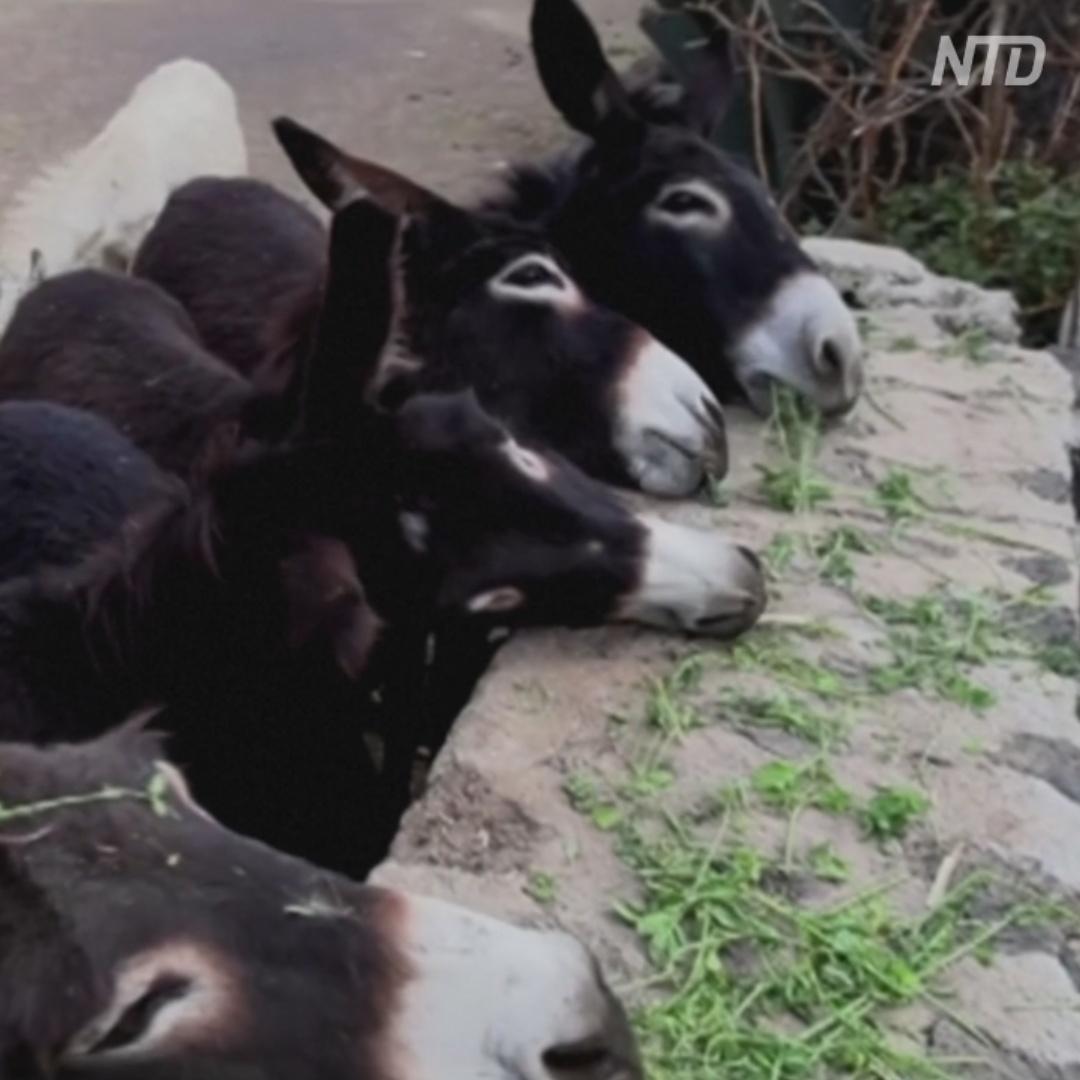 Мексиканцы открыли приют для старых ненужных осликов